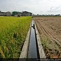 宜蘭的稻田09.JPG