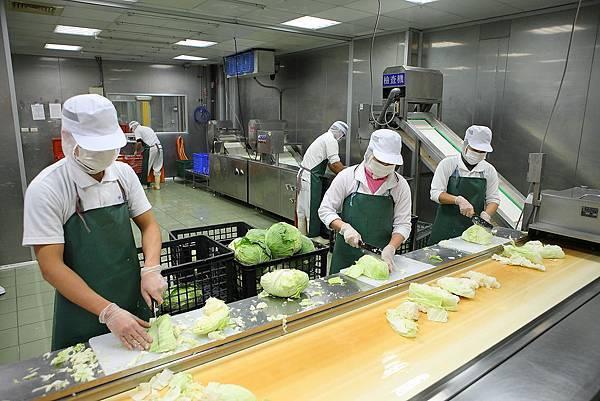 1葉菜類清洗流程_截切_A20472 JPG