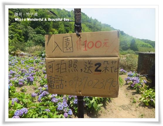 20130601追繡球花-7