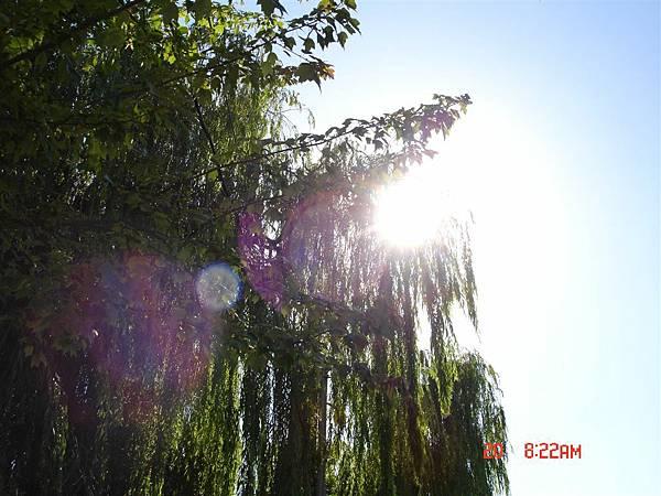 湖畔社區就可以看到漂亮的楊柳
