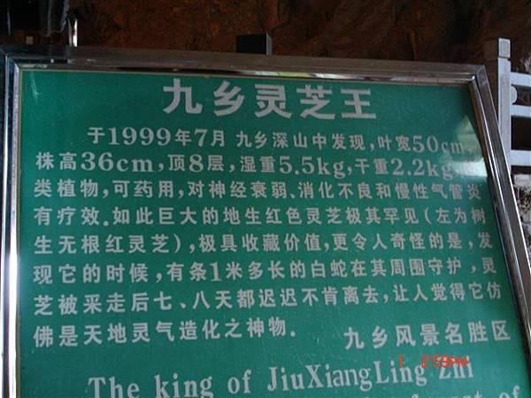 靈芝王的介紹