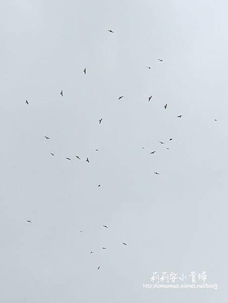 墾丁國家公園的滿州賞鷹季