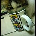 用媽咪的杯子喝水 XD