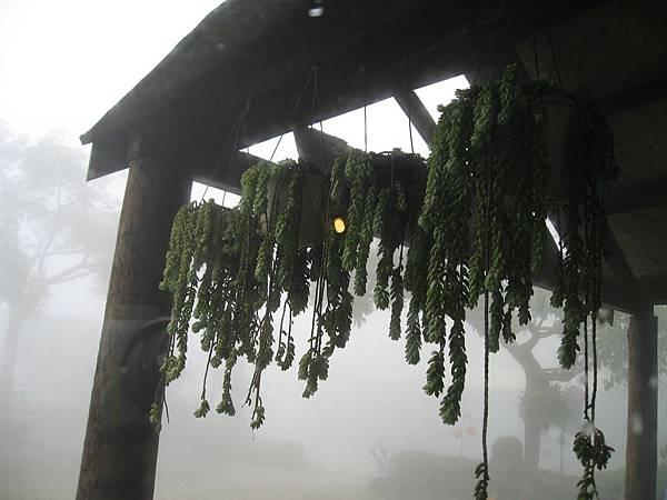 外面霧茫茫