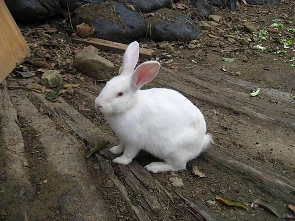 兔兔很親人