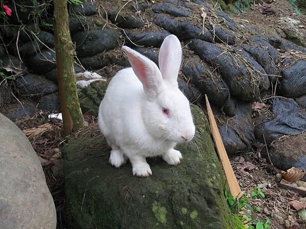 兔兔好大隻