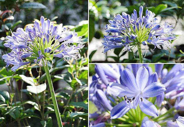 Flower-02.jpg