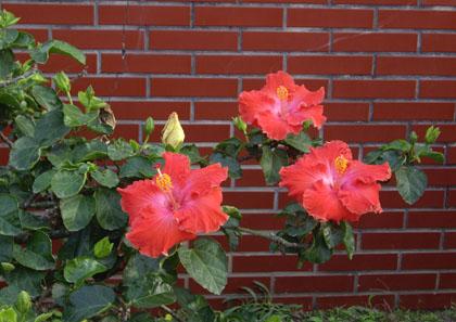 校門口的花