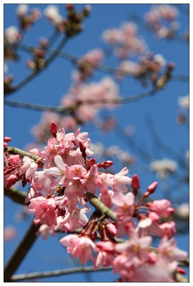 10花在枝頭春意鬧.JPG