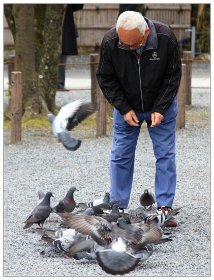 06貪吃的鴿子.JPG