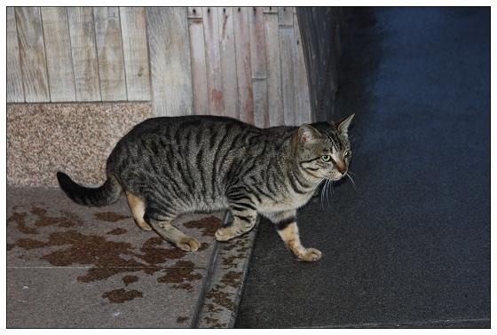 14胖貓.JPG