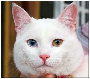 DSC_0275土耳其梵貓