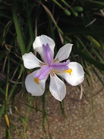 Flower1168