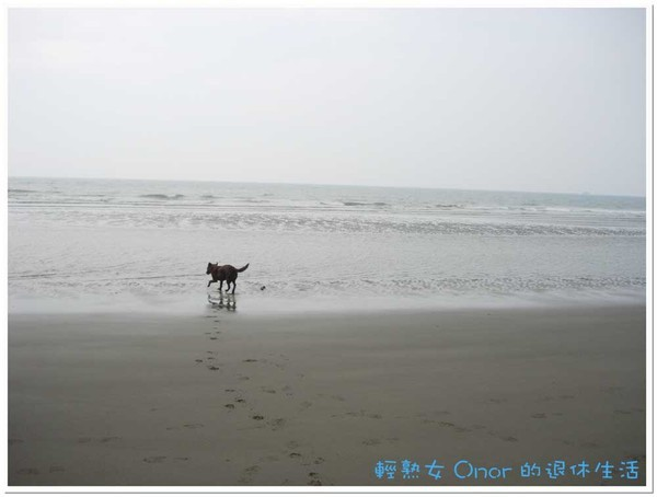 後龍海邊3.jpg
