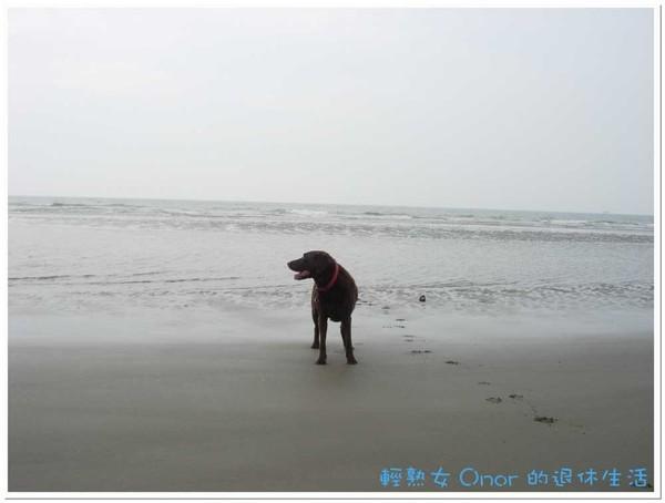 後龍海邊5.jpg