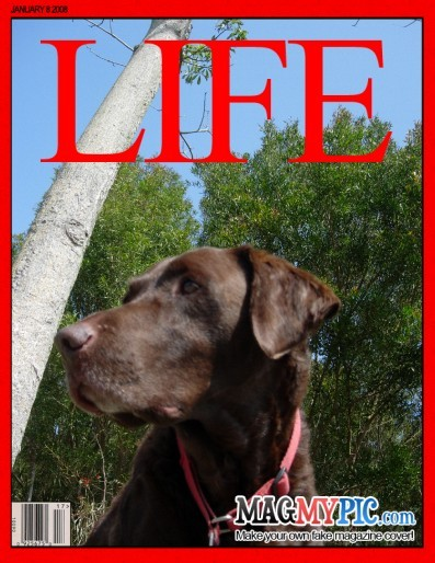 LIFE2.jpg