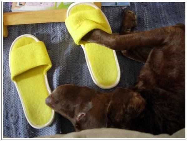 拖鞋3.jpg