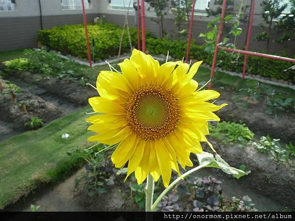菜園-1.jpg