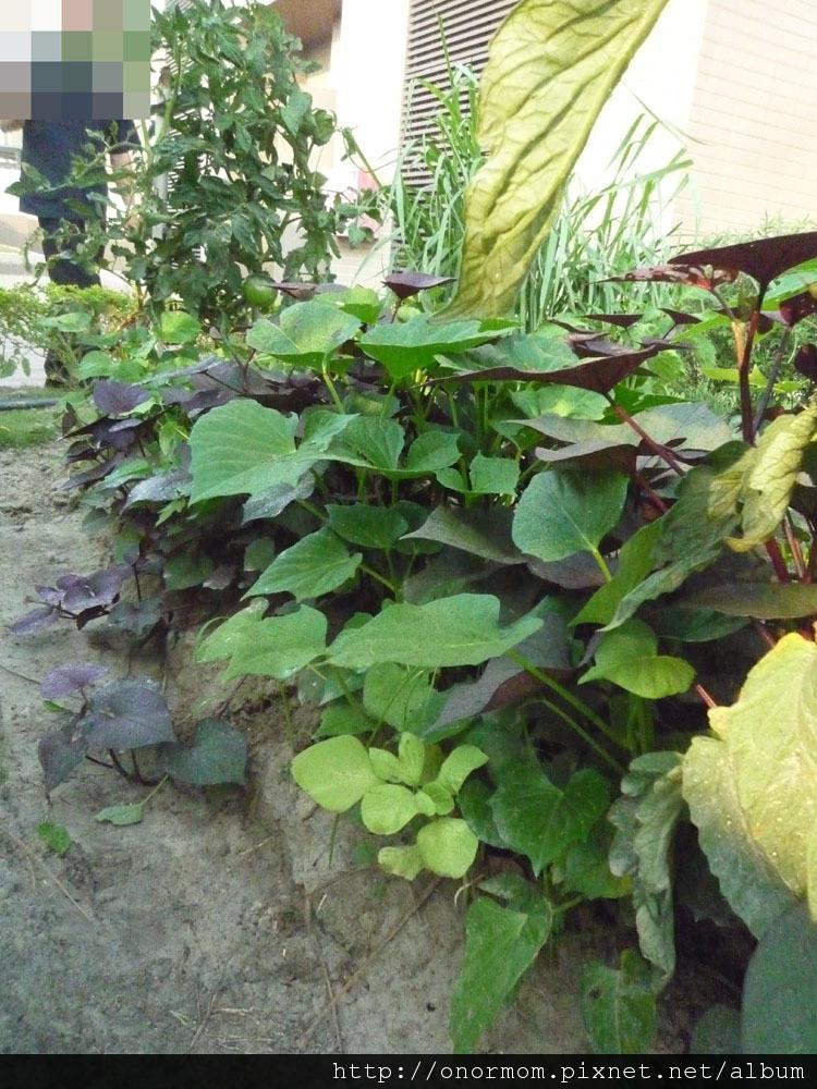 菜園-7.jpg