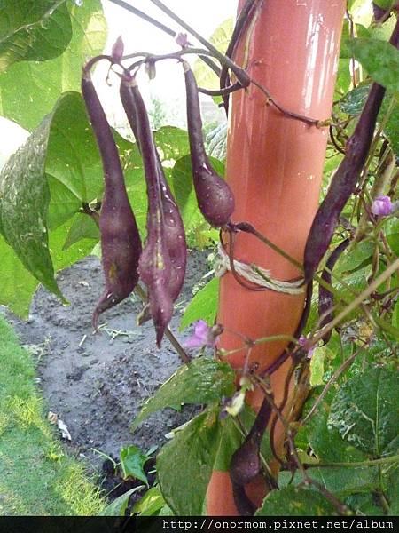 菜園-11.jpg