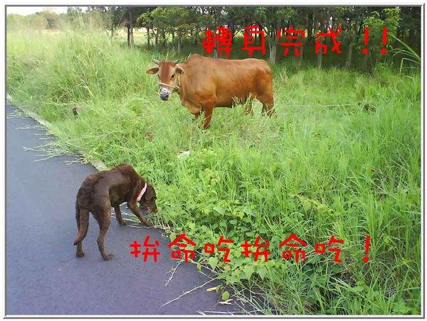 onor與牛11.jpg