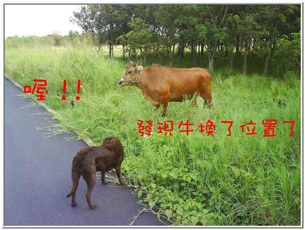 onor與牛12.jpg