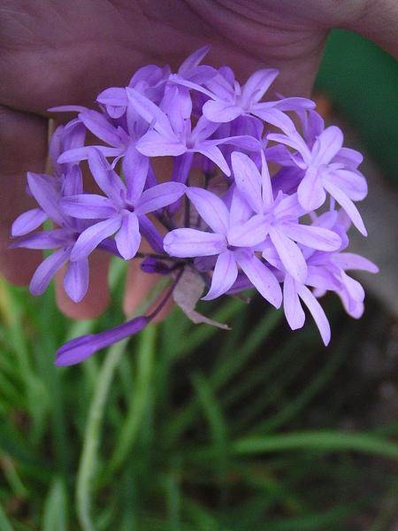 食物根植物 153.JPG