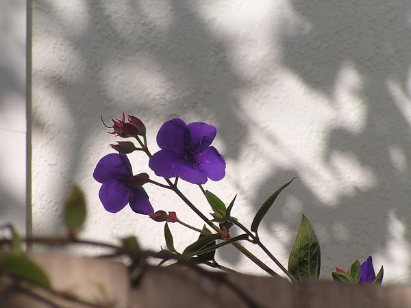 食物根植物 163.JPG