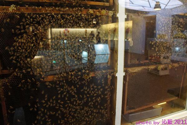 二樓是蜜蜂生態介紹~多到起雞皮疙瘩......