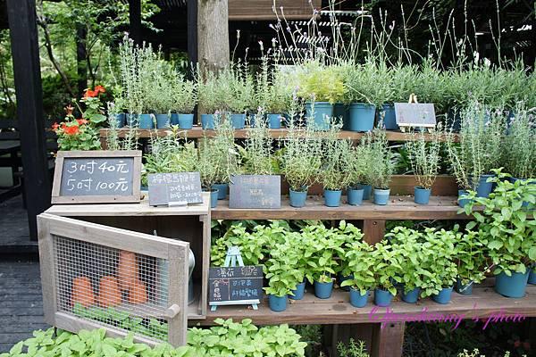 也可以買植物回家種