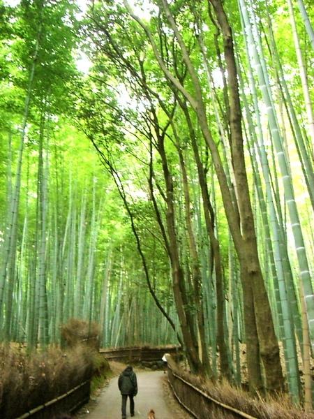 這片竹林很有名