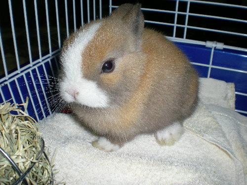 兔子2.jpg