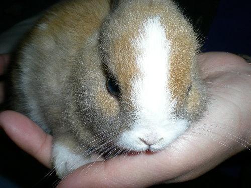 兔子3.jpg