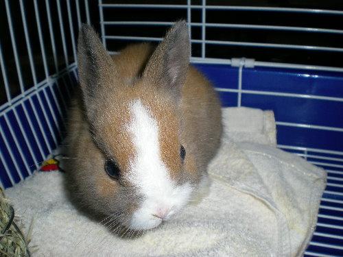 兔子4.jpg