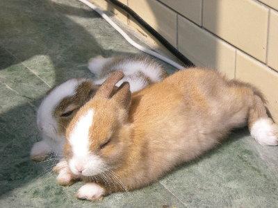 兔子做日光浴3.jpg
