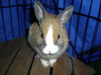 兔子17.jpg