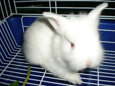 兔子18.jpg
