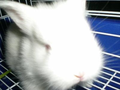 兔子19.jpg