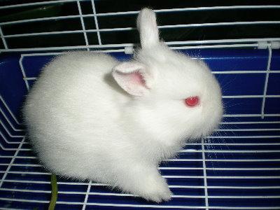 兔子20.jpg