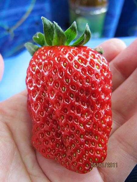 休息站賣的草莓