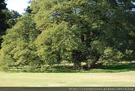 LA Arboretum 087.JPG