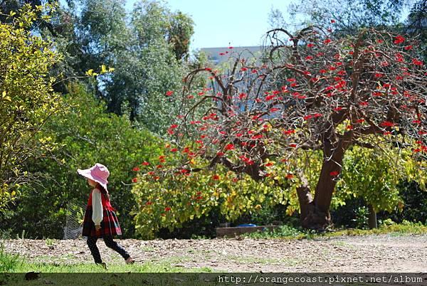 Fullerton Arboretum 068