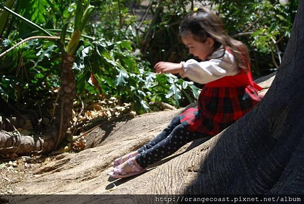 Fullerton Arboretum 097