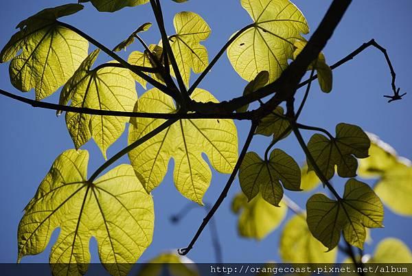 Fullerton Arboretum 135