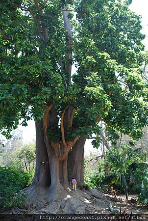Fullerton Arboretum 059