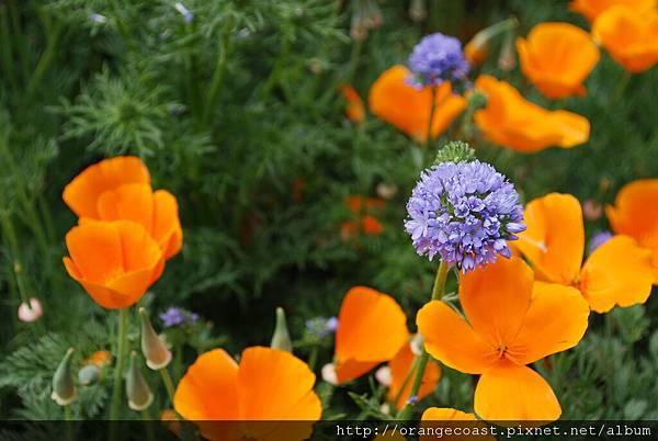 Fullerton Arboretum 008