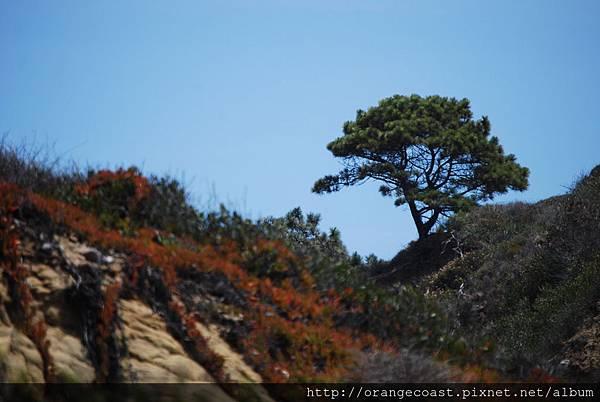 Torrey Pines 070