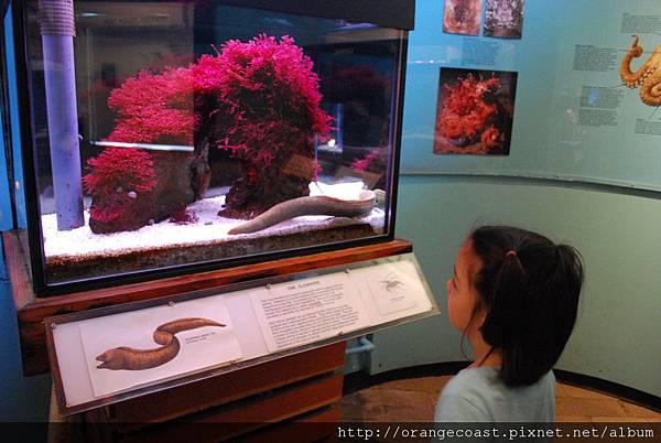 Cabrillo Marine Aquarium 001
