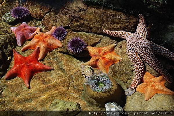 Cabrillo Marine Aquarium 014