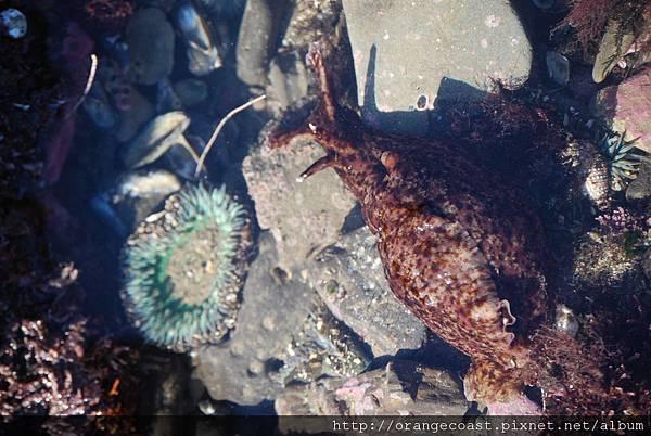 Cabrillo Marine Aquarium 064